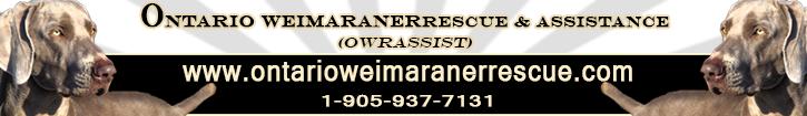 weimaraner rescue in ontario canada